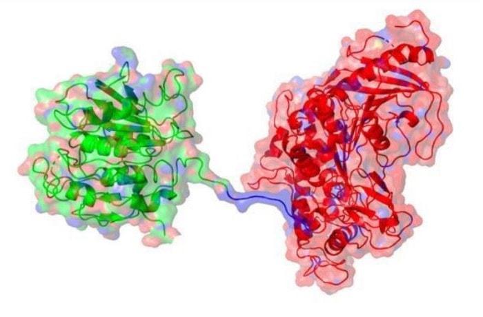 enzima plástico