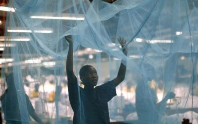 Insecticidal nets in the fight to eradicate malaria