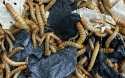 Nuevas vías de biorreciclaje para los envases alimentarios y los residuos plásticos